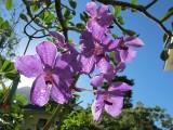 Golden Beach Resort orchids