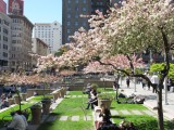 Springtime in Union Square