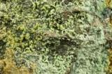 Annabergite, 45 mm specimen. Lady's Rake Mine, Harwood, Teesdale, Co Durham.