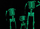 GLOWING SKELETONS  -  ISO 6400  -  TAKEN WITH A SONY/ZEISS 24mm f/1.8 E-MOUNT LENS