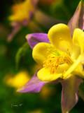 Floral & Plant Images