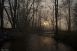 Morning Arrives Over a Stream
