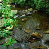 Where the Water Runs Clear