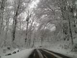 Snow Go Area