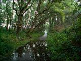 Passer sous les arbres... Oserais-je ?...