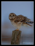 Birds of Sweden; Owls