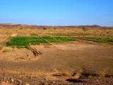Fields in the Sahara