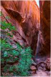 slot canyon on Burr Trail