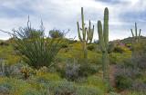 Typical Sonoran Desert vegetation, Bartlett Lake, AZ