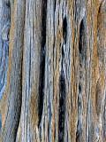 Weathered saguaro skeleton, Bartlet Lake, AZ