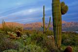 Tonto National Forest, AZ