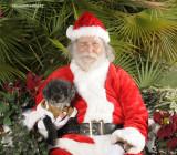 Santa Paws Fundraiser for Pet Emergency Rispirators