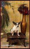 My Dog Portraits