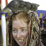 Kitten in the Hair