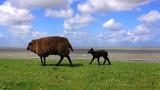 Lauwersoog - Waddendijk