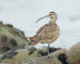 Birds -- Monterey Bay, October 2012