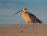 Birds -- Monterey Bay, New Year 2013