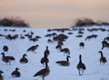 winter field 544