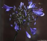 flower_and_bee.jpg