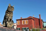 The cats of Burano