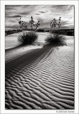 Untitled 8, White Sands National Monument, New Mexico, 2013