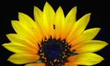 floral_