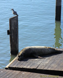 Two S.F. Bay residents