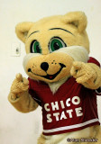 The Chico State Wildcat