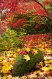 Autumns Carpet