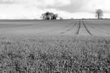 009 Field.jpg
