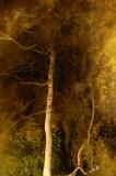 013 Shimmering tree.jpg