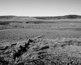 018 Wasteland.jpg