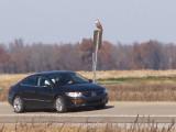 Ferruginous Hawk - 11-24-2012 - immature - Hwy 67 -AR  roadside.