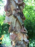 fantastic tree bark