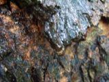 more wet bark
