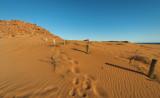 Footprints in the Dunes D80_0240s.jpg