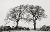 High keys trees