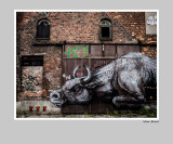 angry bull