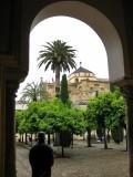 Cordoba. Mezquita-Catedral. Patio de los Naranjos