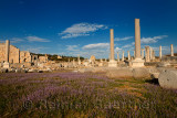 Field of wild lavender in the Agora ruins of Perge with Columns and Hellenistic Tower and moon