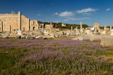 Wild lavender flowers in the Agora ruins of Perge with Columns and Hellenic Gate and moon