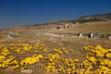 Archaeological site of ancient Hierapolis Greco Roman city with theatre ruins and yellow colchicum flowers in Fall