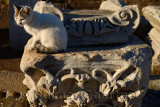 Feral cat on blocks of Ionic and Corinthian columns on Curetes street in ancient Ephesus Turkey