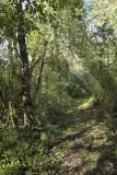 s'engouffrer dans la forêt