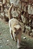 un chat roux à Roussillon