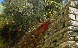 couleurs provençales
