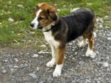 our little companion