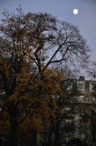 Parc Monceau - 9570