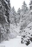 Free Nordic  Ski