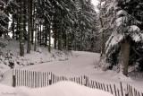 GERARDMER. Bas Rupts Nordic Ski Tracks.